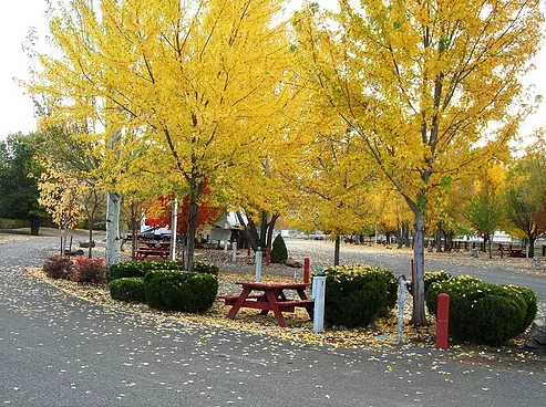 Campground and picnic tables during Fall
